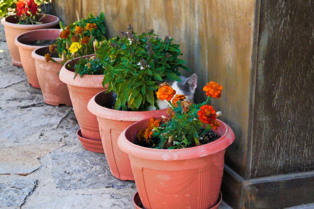 Koty w Grecji