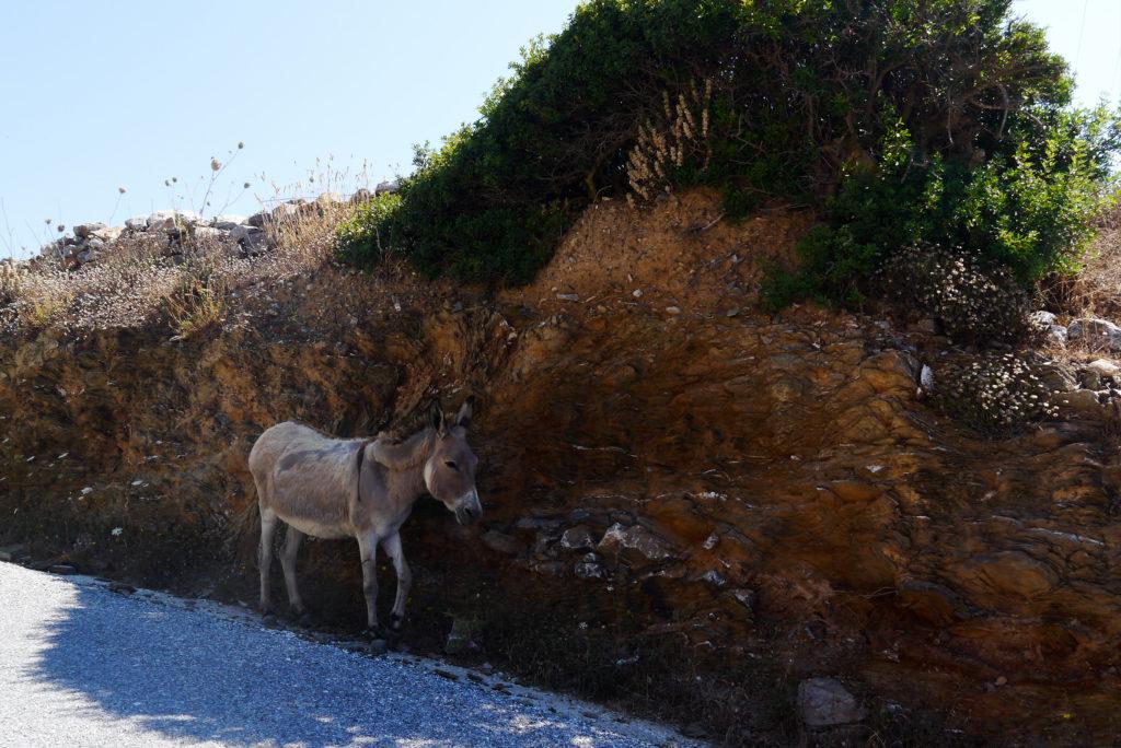 Osiołki na Amorgos